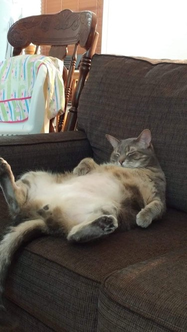 lazy cat on a couch