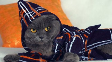 Cat in a bathrobe