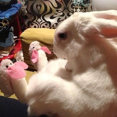 bunny wearing bunny slippers
