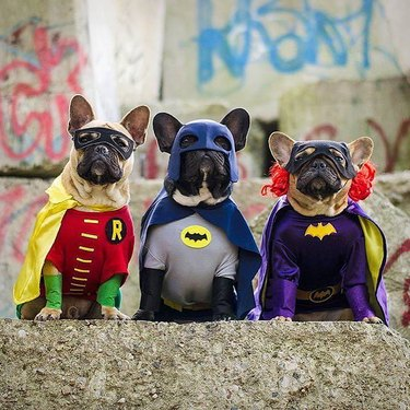 134 comic book character names for dogs