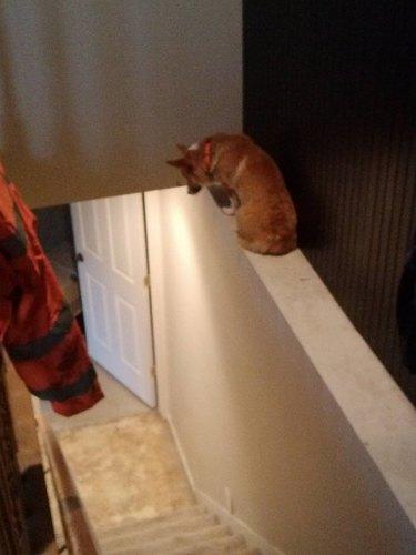 Dog stuck on stair railing.