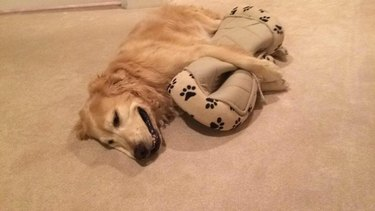 Dog cuddling with its bed