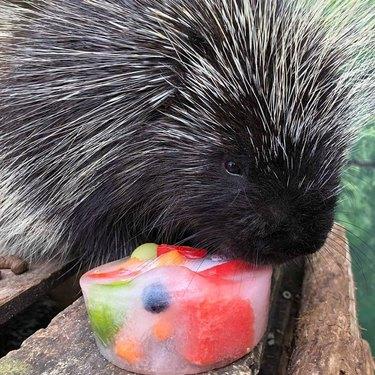 porcupine snacks on frozen fruit salad