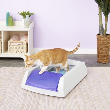 cat using self-cleaning litter box
