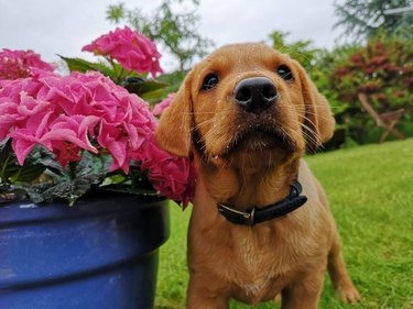Puppy with dew on its snout