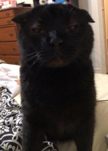 guuuuurumpy cat named Holten