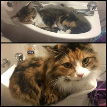 Side-by-side photos of a fluffy cat in a sink as a kitten and as an adult.