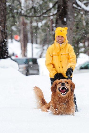 Excited dog running through snow
