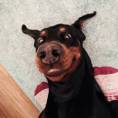 17 Dogs With Completely Adorkable Smiles