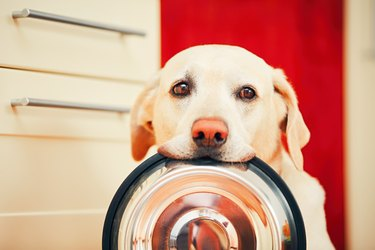 dog holding food bowl in mouth