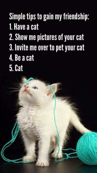 Kitten tangled in yarn.