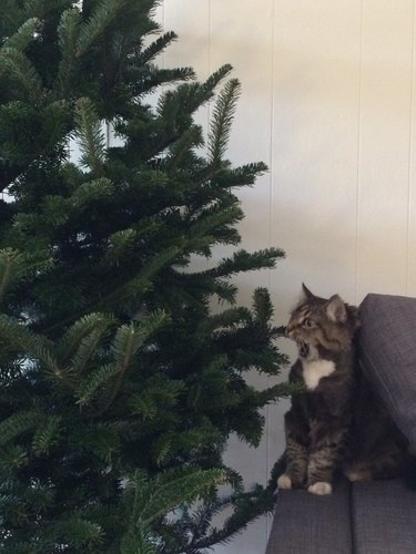 Cat looking at Christmas tree