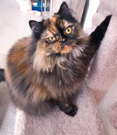 scowling cat reveals hiding spot for catnip