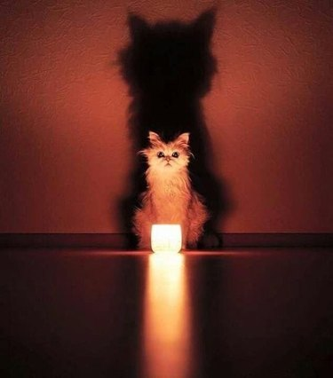 light casts cat's shadow against wall