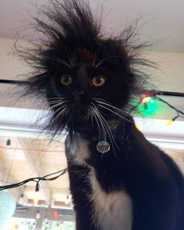 tuxedo kitty with messy bed head