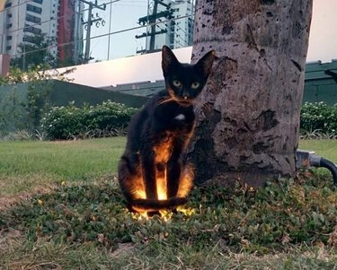 black cat standing on recessed ground light
