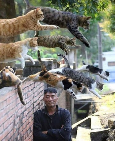 gang of cats jumps over wall