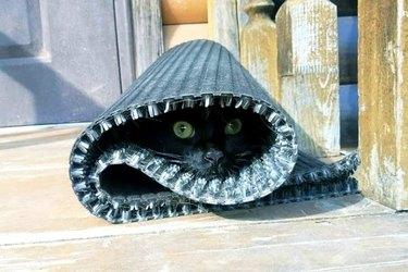 black cat wrapped like burrito in rug
