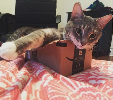 cat struggling inside too-small box