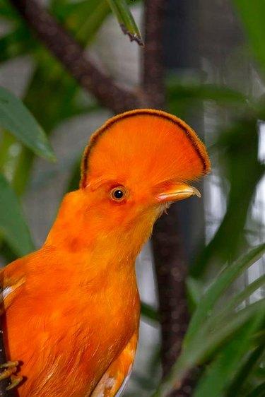 bird looks like orange slice