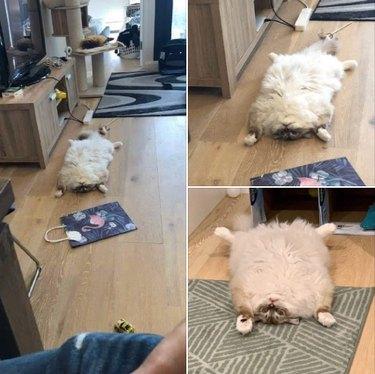 cat prone on back looks like rug