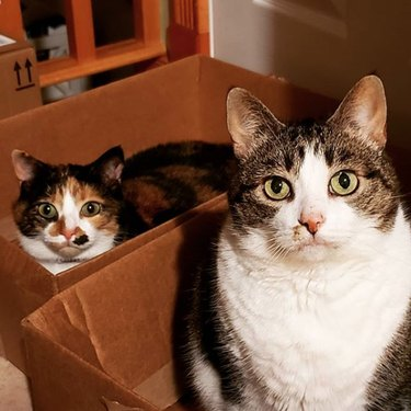 two cats in two separate boxes