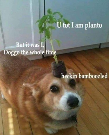 dog disguised as plant