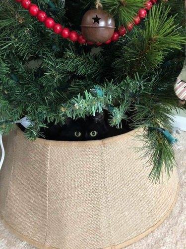 black cat hides under Christmas tree