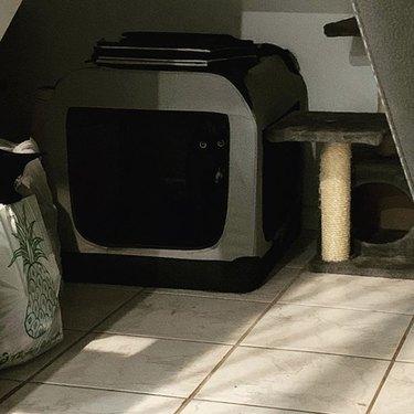 black cat wins at hide and seek