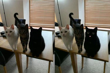 black cat opens eyes