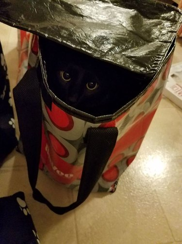 black cat hiding in shadows