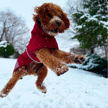 dog jumping in snow