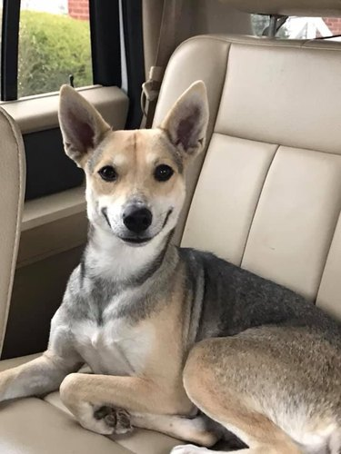 A happy smiling dog that just got  adopted