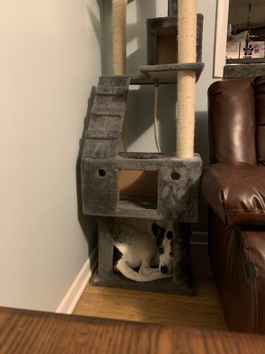 Dog curled up at base of cat tree