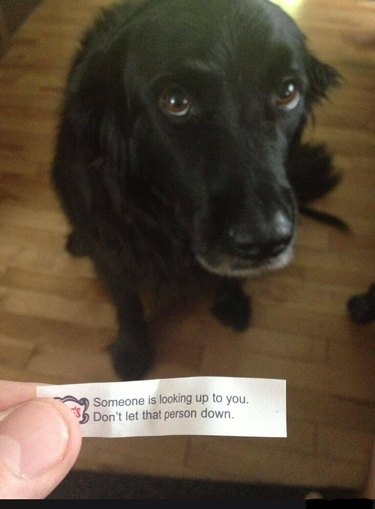 """A very sweet looking pup and the a fortune that says, """"Someone is looking up to you. Don't let that person down."""""""