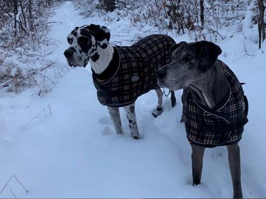 two dogs in sweaters in snow
