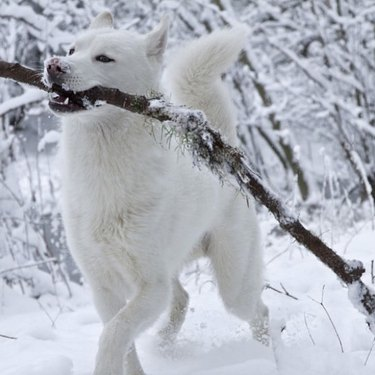 dog with a big stick in snow