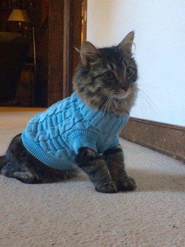 Kitten wearing a sweater.