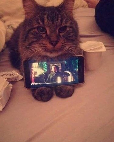 Cat holding phone so her person can watch tv on the phone