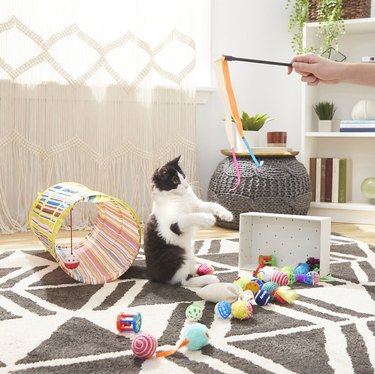 cat plays with toy bundle