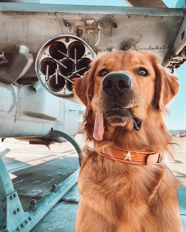 dog with tongue lolling out the side of its mouth