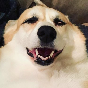 dog with eyes closed and mouth open