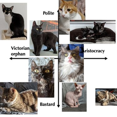 woman with 9 cats slots ranks them on orphan to aristocracy scale