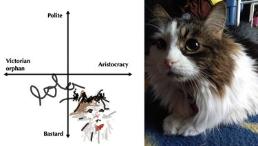barn cat has aristocratic qualities