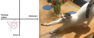 stretching cat is kind of a jerk