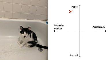polite orphan cat hunts mouses dead