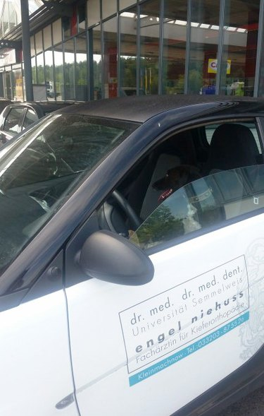 Dog sitting in a car with a doctor's phone number on the side.