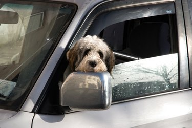 Wet dog with its head out the window of a wet car.