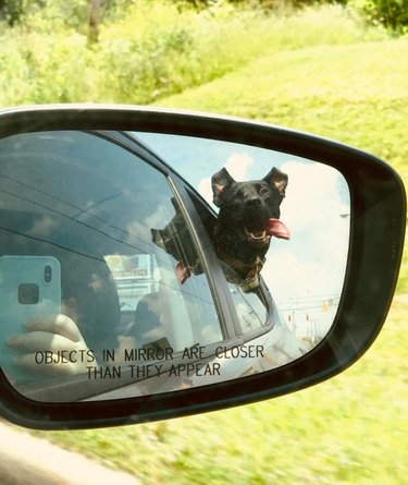 Dog sticking its head out the window.