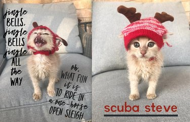 foster kitten named Scuba Steve wearing Christmas hat
